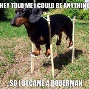dog funny2